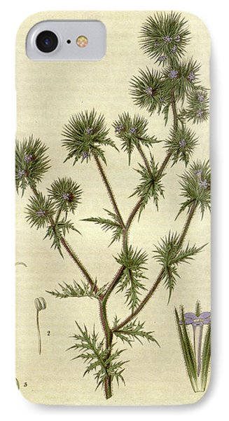 Botanical Print By Sir William Jackson Hooker IPhone Case by Quint Lox