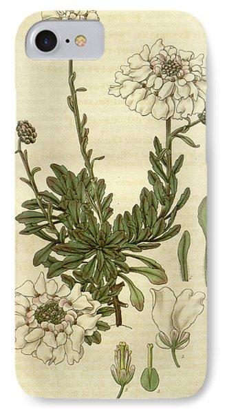 Botanical Print By Sir William Jackson Hooker IPhone Case