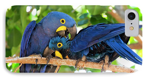 Brazil, Mato Grosso, The Pantanal IPhone Case