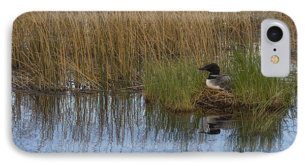 Common Loon Gavia Immer, Canada IPhone 7 Case by John Shaw