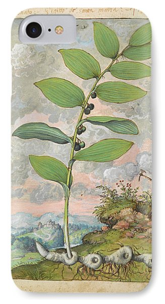 Medicinal Plant IPhone Case by British Library