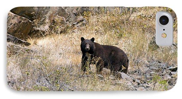231p Black Bear IPhone Case