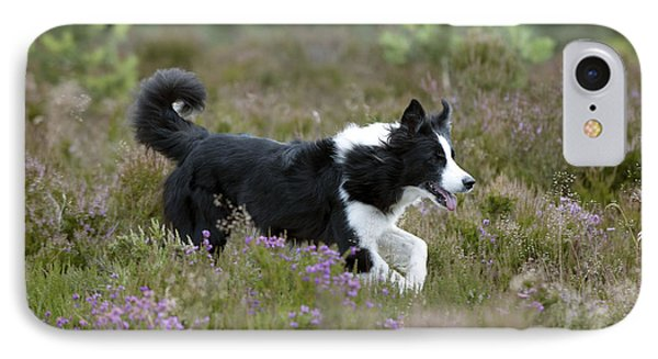 Border Collie IPhone Case by John Daniels