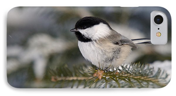 Black-capped Chickadee IPhone Case by Linda Freshwaters Arndt