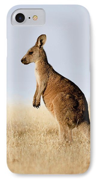 Eastern Grey Kangaroo Or Forester IPhone Case