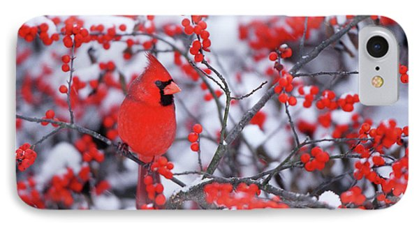 Northern Cardinal (cardinalis Cardinalis IPhone Case by Richard and Susan Day