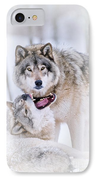 Timber Wolf Pictures Phone Case by Michael Cummings