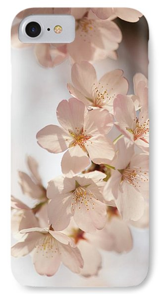 Yoshino Cherry (prunus X Yedoensis) IPhone Case by Maria Mosolova