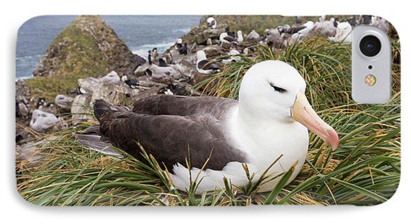 A Black Browed Albatross IPhone 7 Case by Ashley Cooper