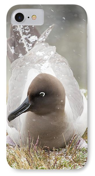 A Light Mantled Albatross IPhone 7 Case by Ashley Cooper