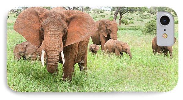 African Elephant Loxodonta Africana IPhone Case by Photostock-israel