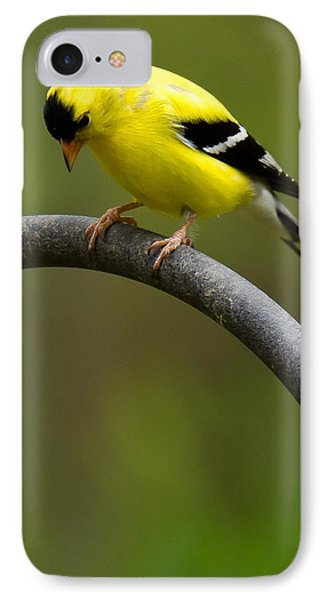 IPhone Case featuring the photograph American Goldfinch by Robert L Jackson