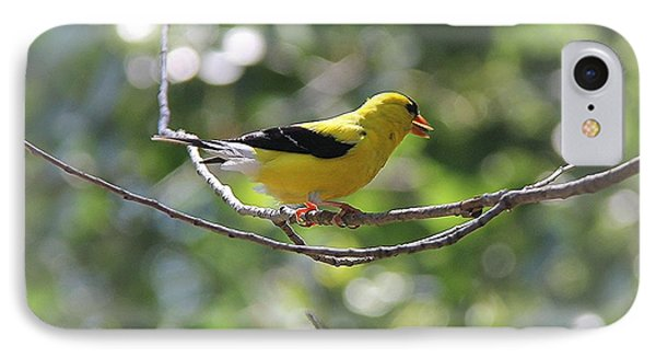 IPhone Case featuring the photograph American Goldfinch by Yumi Johnson