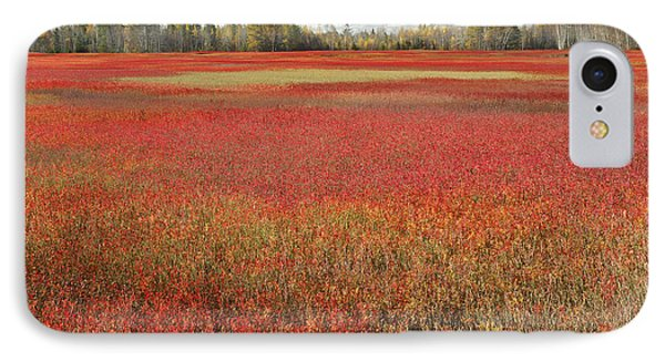 Autumn Blueberry Field Maine Phone Case by Scott Leslie