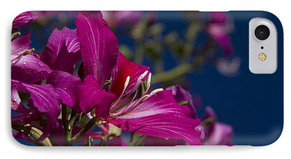 Bauhinia Purpurea - Hawaiian Orchid Tree IPhone Case