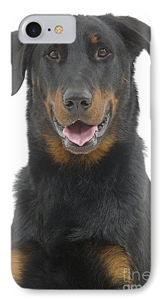Beauceron Dog IPhone Case by Jean-Michel Labat