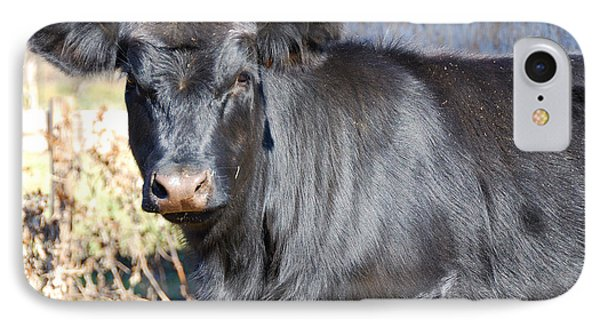 Black Angus Heifer IPhone Case by Thea Wolff