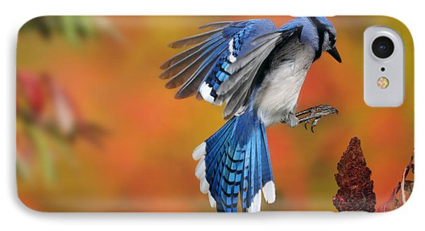 Blue Jay Phone Case by Scott Linstead