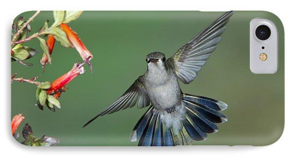 Broad-billed Hummingbird Phone Case by Anthony Mercieca