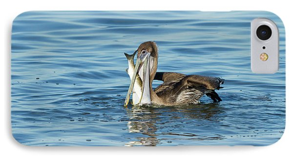 Brown Pelican (pelecanus Occidentalis IPhone Case by Larry Ditto