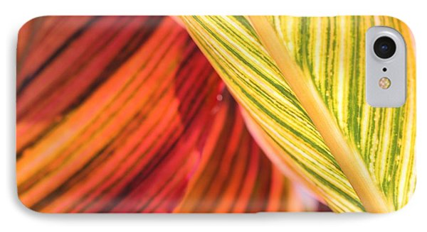 Canna Lily Named Durban IPhone Case