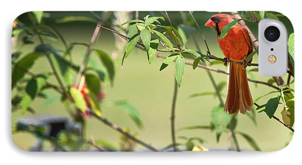 Cardinal Phone Case by Bill Wakeley