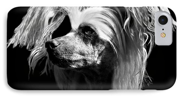 Chinese Crested Hairless IPhone Case by Diana Angstadt