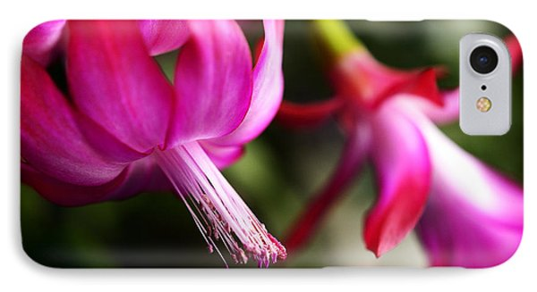 Christmas Cactus In Bloom Phone Case by Thomas R Fletcher