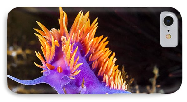 Colorful Nudibranch IPhone Case by Joe Belanger