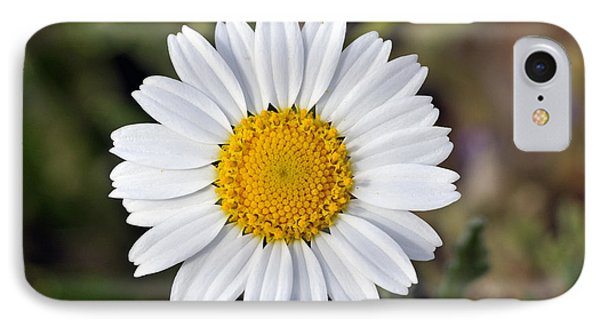 IPhone Case featuring the photograph Daisy Flower by George Atsametakis