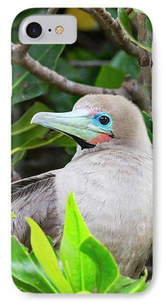 Ecuador, Galapagos Islands, Genovesa IPhone 7 Case