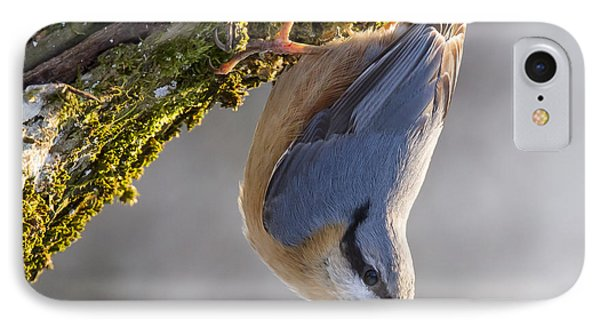 Eurasian Nuthatch IPhone Case