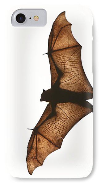 Flying Fox IPhone Case by Craig Dingle
