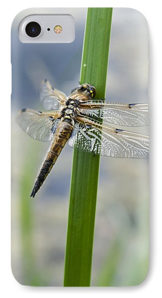 Four-spotted Chaser Dragonfly IPhone Case by David Isaacson