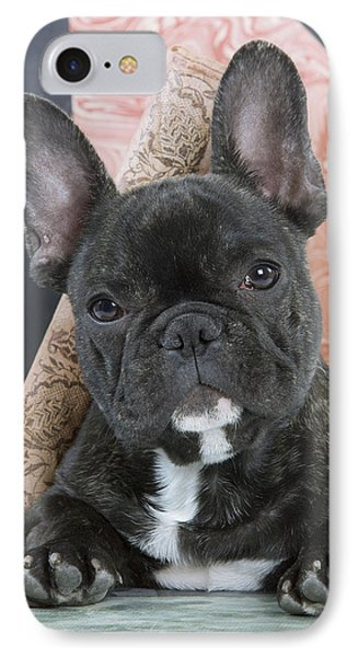 French Bulldog Puppy IPhone Case
