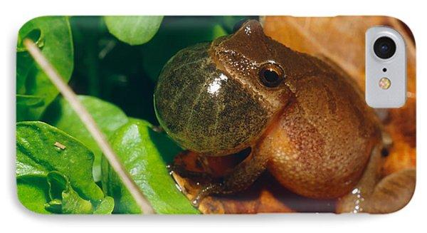 Frog Phone Case by David Davis