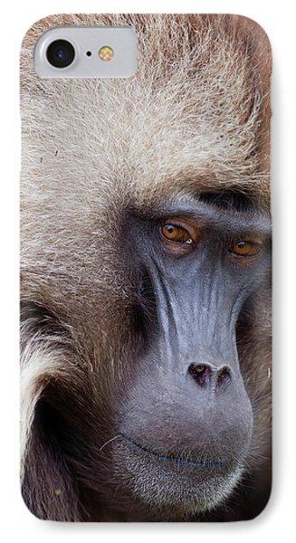 Gelada, Gelada Baboon (theropithecus IPhone Case by Martin Zwick