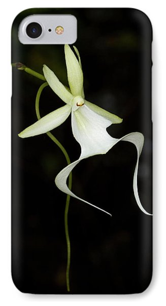 Ghost Orchid In Bloom, Polyrrhiza IPhone Case