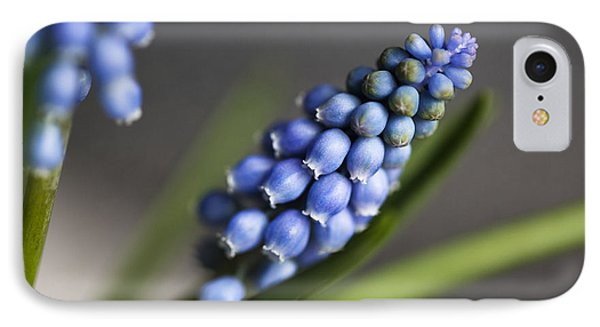 Grape Hyacinth IPhone Case by Nailia Schwarz