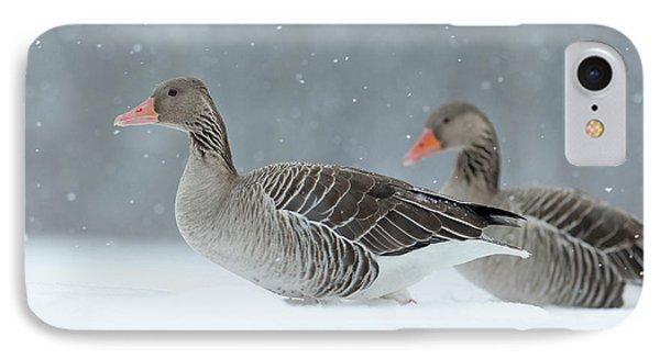 Graylag Goose (anser Anser IPhone Case by Martin Zwick