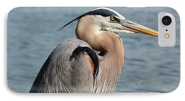 Great Blue Heron Profile Phone Case by Carol Groenen