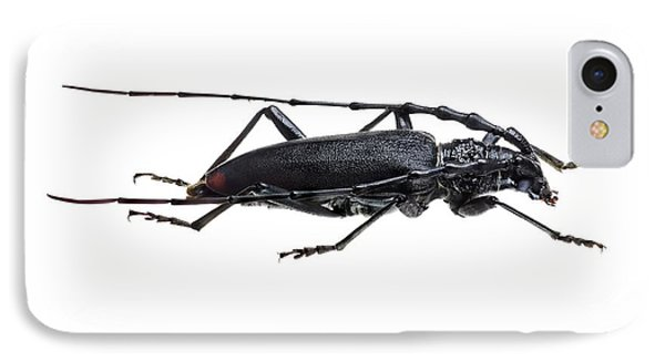 Great Capricorn Beetle IPhone Case by F. Martinez Clavel