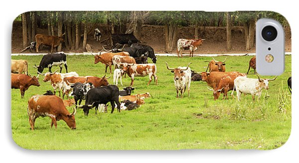 Herd Of Texas Longhorn Cattle In Green IPhone Case by Piperanne Worcester