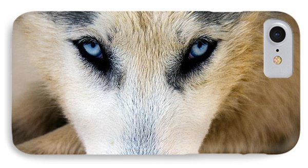 Husky  IPhone Case by Stelios Kleanthous
