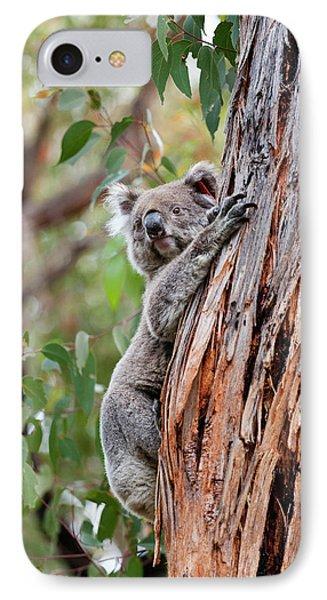 Koala (phascolarctos Cinereus IPhone 7 Case
