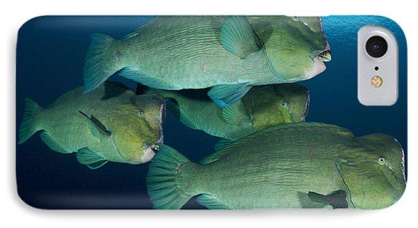 Large School Of Bumphead Parrotfish Phone Case by Steve Jones