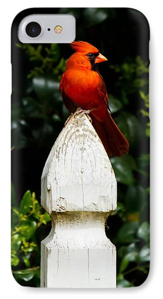 IPhone Case featuring the photograph Male Cardinal by Robert L Jackson