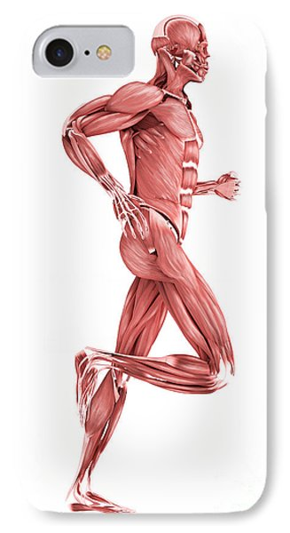 Medical Illustration Of Male Muscles Phone Case by Stocktrek Images