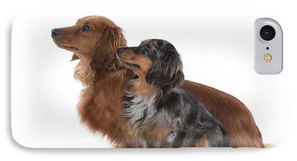 Miniature Long-haired Dachshunds IPhone Case by John Daniels