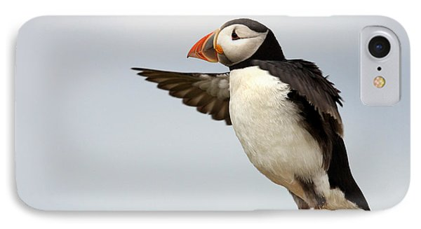 Puffin On The Farne Islands Great Britain IPhone Case